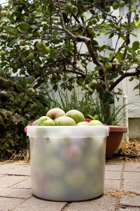 2.7kg (6 pounds) of crab apples